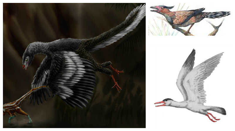 Archeopteryx (left), Sinornis (top) and Ichthyornis (bottom)
